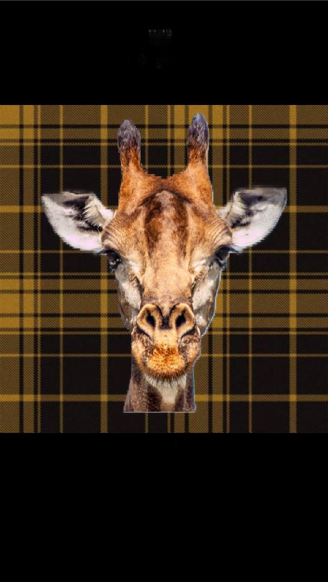 Trad giraffe